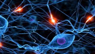 V Encuentro Talenmo Neuroliderazgo